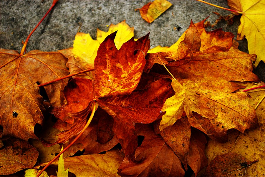 Fall_Leaves_by_katjeya