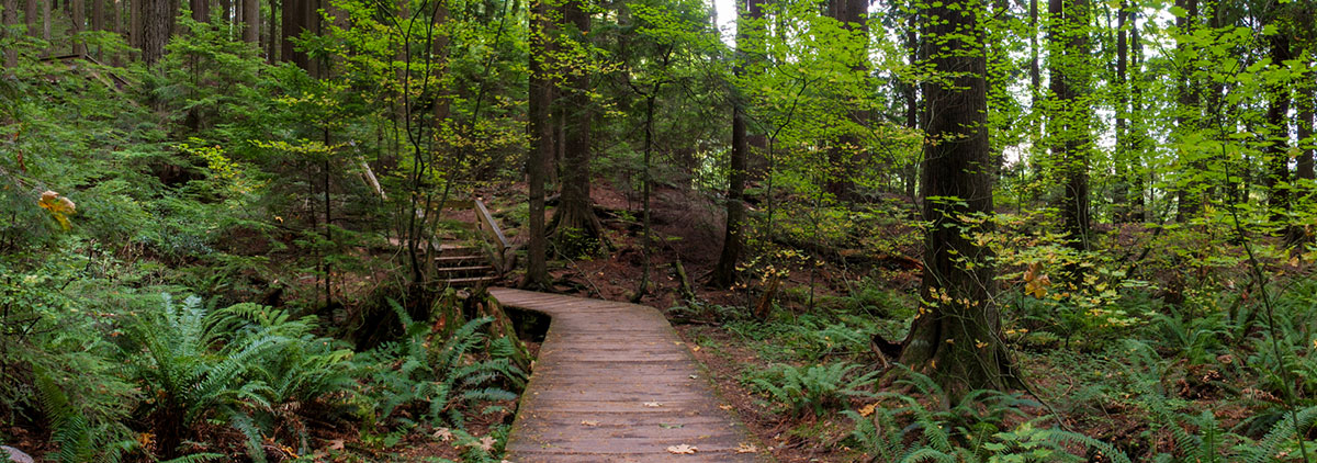 boardwalk in lynn canyon park